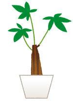 plant_pakira.jpg