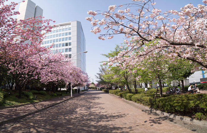東京流通センターの景観を彩る桜